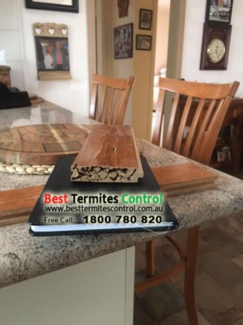 Termite Damage in Melbourne