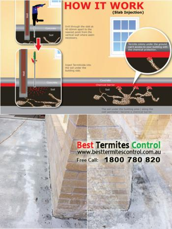 Termite Treatment by Termidor Injection in Melbourne Templestowe