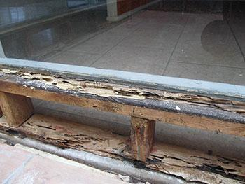Termite Treatment in Melbourne