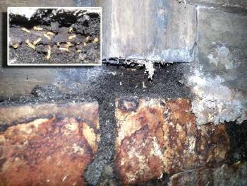 Termites Inspection GlenWaverley