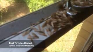 Termite Invasion in Melbourne
